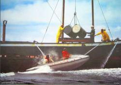 Greenpeace-boten hinderen het storten van afval in zee